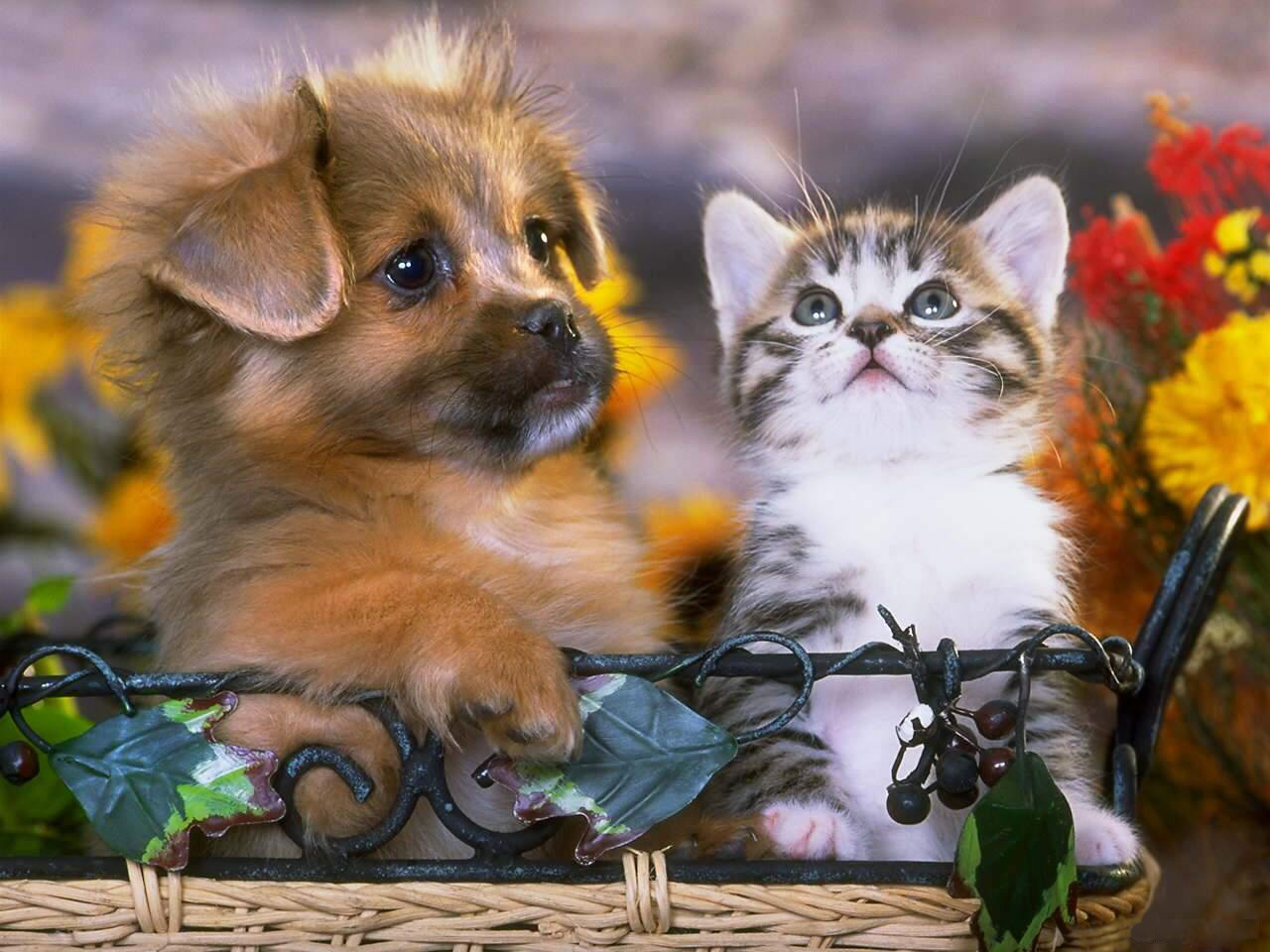 Просто, прикольные открытки с животными и цветами