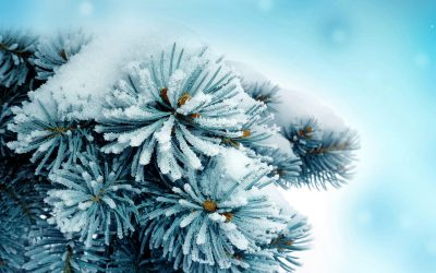 В конце недели в Кузбассе потеплеет до 0°С