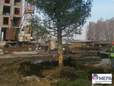 В Кемерове строители спасли дерево