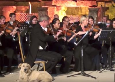 Видео: в Турции на выступлении оркестра зрителей умилил вышедший на сцену пёс