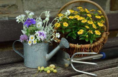Закон о садоводческих и огороднических товариществах подписал Владимир Путин