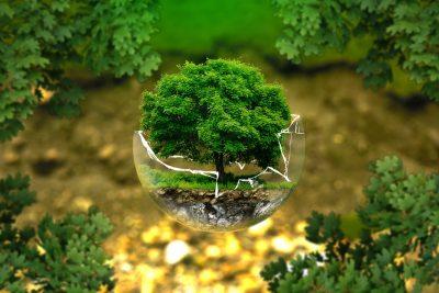 Новокузнецк опередил Кемерово в рейтинге экологического развития