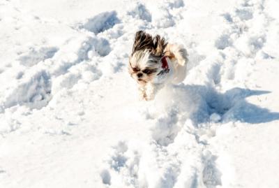 В Кузбассе синоптики прогнозируют небольшие морозы в выходные