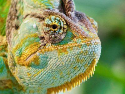 В России учёные создали искусственную «кожу хамелеона»