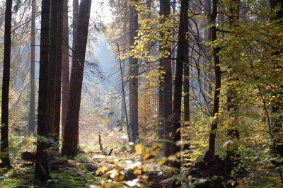 В Кузбассе в лесу охотник застрелил знакомого, уголовное дело передали в суд