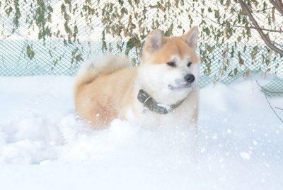 Кемеровчанин за миллион сдаёт своего пса в аренду