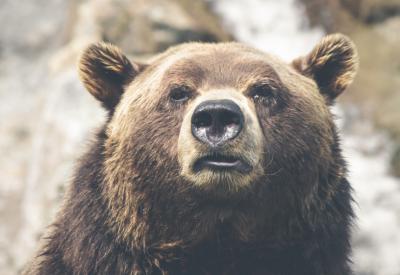 Как искали медведя в кузбасском городе