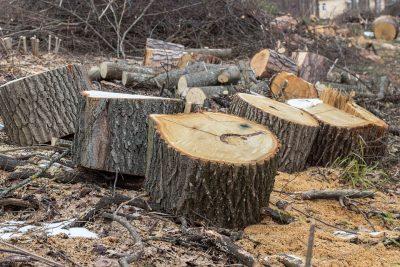 Сестра убитого деревом школьника в Кузбассе опровергла версию следствия