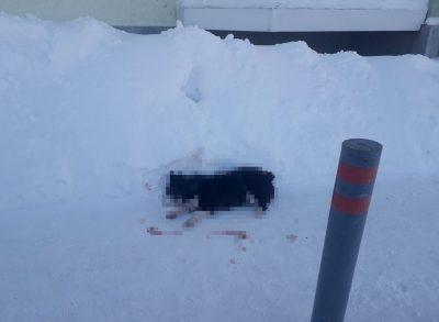 Живодёры или догхантеры: в Кемеровском районе нашли сразу двух убитых собак