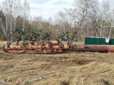 Фото: в кемеровской Лесной Поляне появится необычное гигантское «дерево»