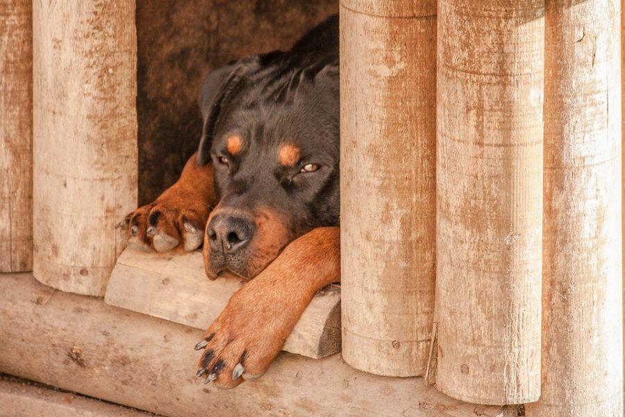 В Кузбассе живодёр до смерти избил собаку