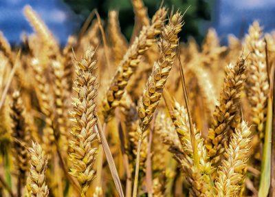 Крупный банк поможет увеличить поставки сибирского зерна в страны ближнего и дальнего зарубежья