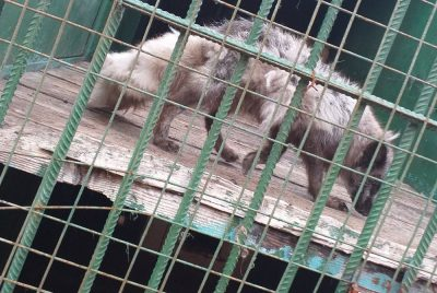 «Проявите сострадание, а не клипы снимайте»: новокузнечанка обратилась с заявлением к властям