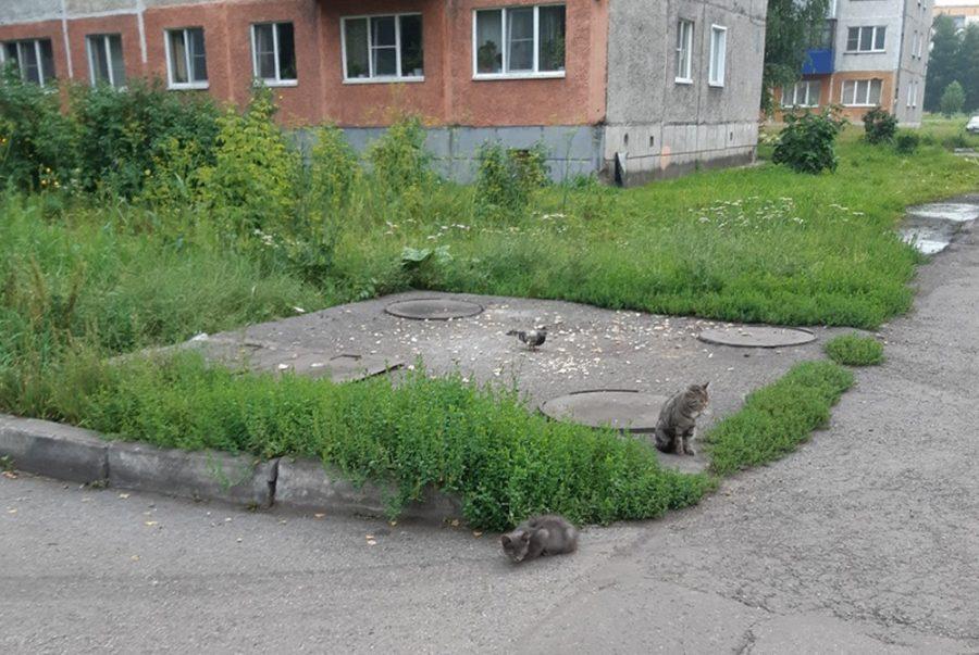 Буду убивать: кузбассовец угрожает отравить всех кошек во дворе