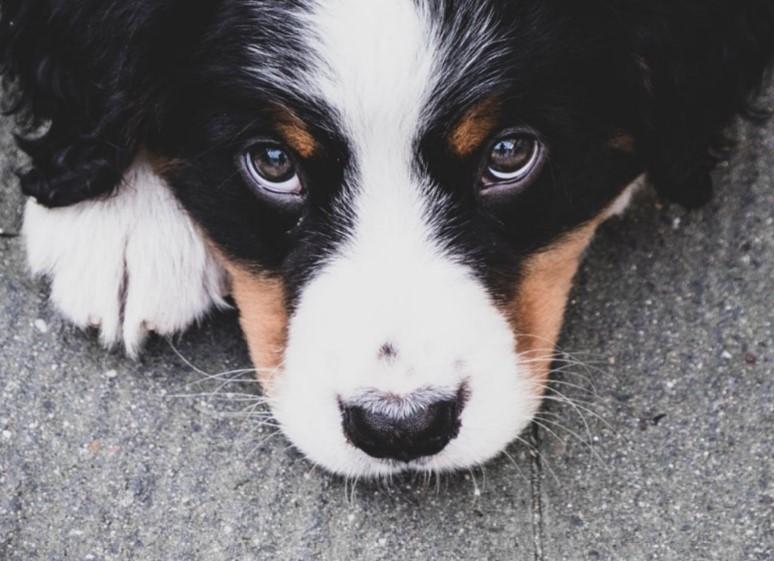 Видео: в Кузбассе собака привела хозяина к смерти