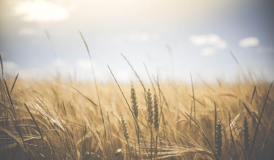 В Кузбассе глава фермерского хозяйства «нагрела» государство на 1 365 000 рублей