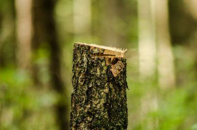 Видео: в Кемерове снова вырубают деревья