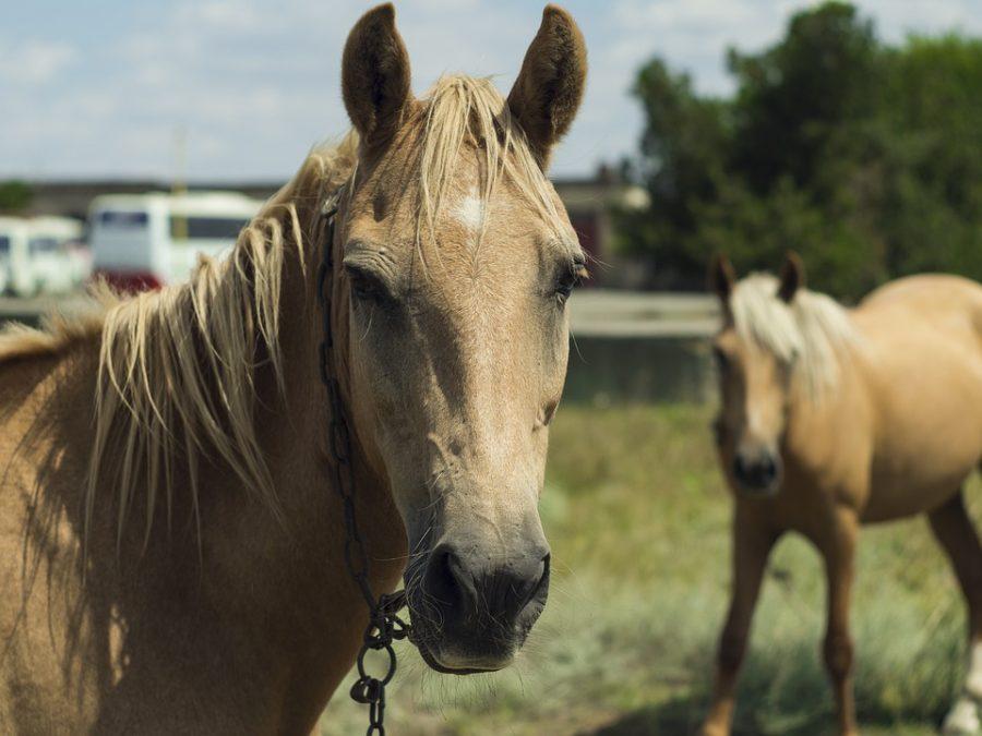 Видео: что случилось с конём на кузбасской трассе?