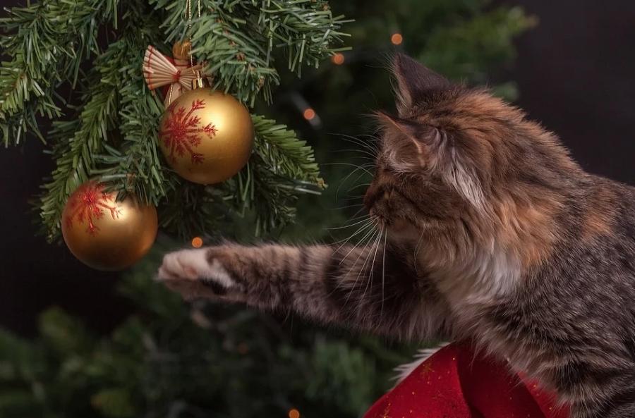Стало известно, какой мороз будет в новогоднюю ночь в Кузбассе