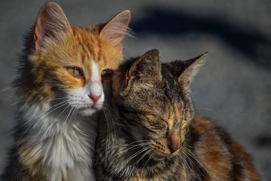 Кемеровские власти потратят 8 миллионов на бродячих животных