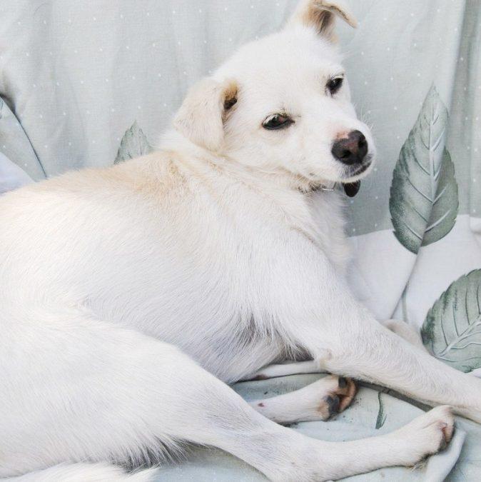 Кемеровскому приюту для животных «Верный» требуется помощь